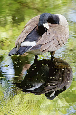 Photograph - Reflections Of Serenity by Cheryl Baxter