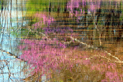 Photograph - Reflections Of Spring by Linda Shannon Morgan