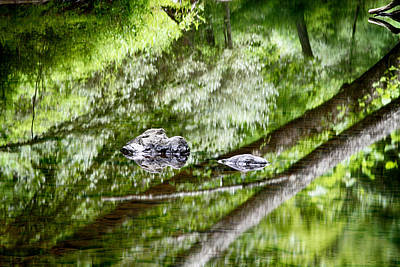 Photograph - Reflections Of Van Campens Glen by Dawn J Benko