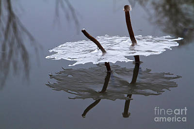 Photograph - Reflections Of Winter by Dennis Hedberg