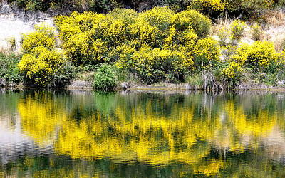 Photograph - Reflections Of Yellow by AJ  Schibig