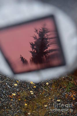 Personalized Name License Plates - Reflections on a big pink spruce by Brian Boyle