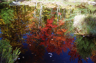 Art Print featuring the photograph Reflections On Algonquin by David Porteus
