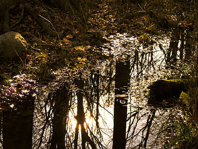Reflections On An Autumn's Evening Original by Jo-Anna Pippen