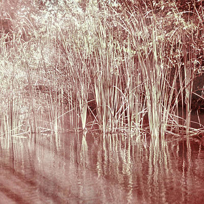 Photograph - Reflections On Lake Trafford by Carolyn Marshall