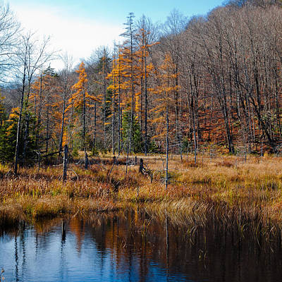 Route 66 - Reflections on the South End of Bald Mountain Pond by David Patterson
