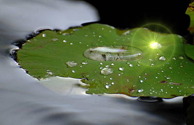 Photograph - Reflections by Pamela Parton