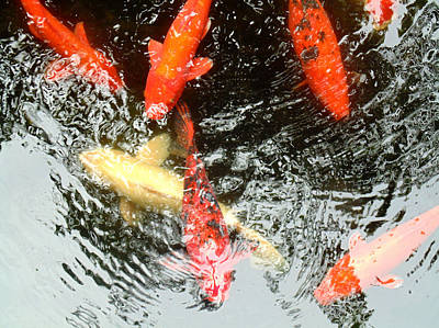 Koi Digital Art - Reflections Through Their Minds by Marcello Cicchini