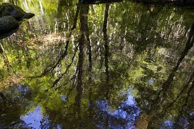 Photograph - Reflections by Wade Crutchfield