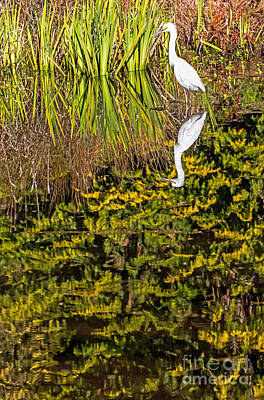 Photograph - Reflections With Egret by Kate Brown