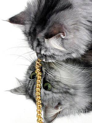 Prints Cat Photograph - Reflective Curiosity by Graham Taylor