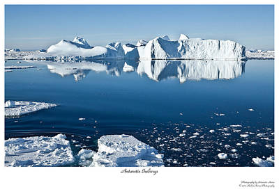 Reflective Icebergs Art Print by David Barringhaus