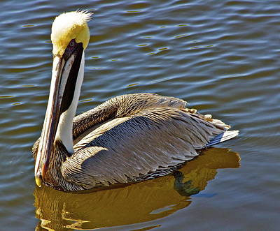 Art Print featuring the photograph Reflective Pelican by Alice Mainville