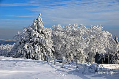 Trees In Snow Photograph - Refresh by Lois Bryan