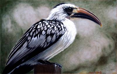 Regal Hornbill Art Print