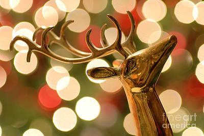 Christmas Lights Photograph - Regal Reindeer by Amy Cicconi