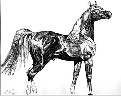 Drawing - Regal Stance by Audrey Van Tassell