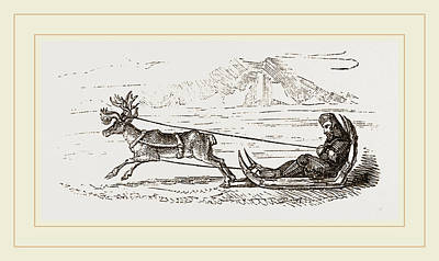 Harness Drawing - Rein-deer Harnessed To A Sledge by Litz Collection