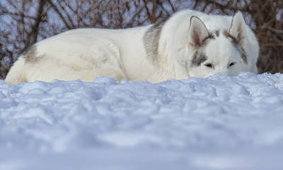 Photograph - Relaxing In The Snow by Jonathan Grim