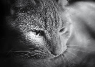 Photograph - Relaxing Kitty by Patrick M Lynch