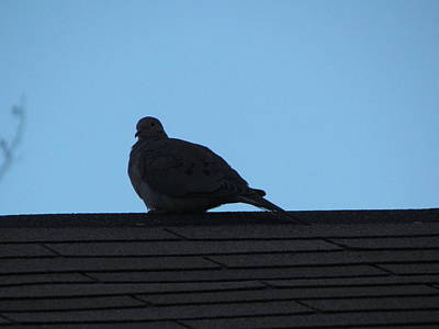 Photograph - Relaxing On The Roof by Rickey Rivers Jr