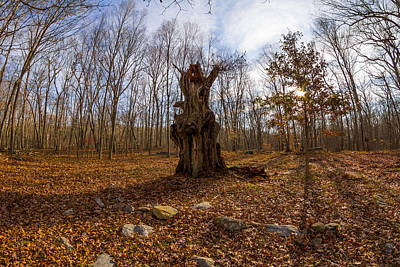 Photograph - Remains Of The Ledyard Oak by Kirkodd Photography Of New England