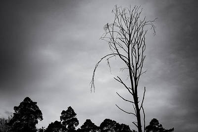 Bare Trees Photograph - Remarkable Bare Tree And Sky With Dark Clouds by Matthias Hauser