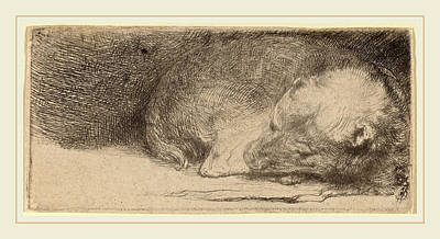 Puppy Drawing - Rembrandt Van Rijn Dutch, 1606-1669, Sleeping Puppy by Litz Collection