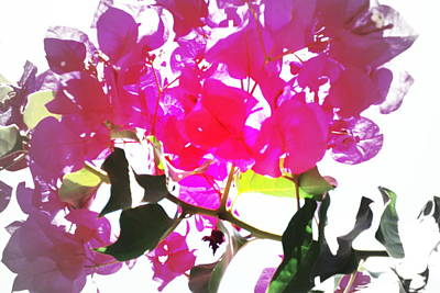 Target Threshold Watercolor - Remember My Big And Beautiful Bouganvillea by Hilde Widerberg
