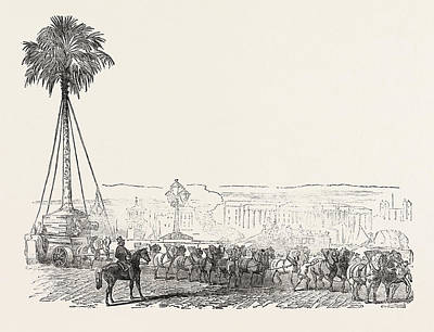 Removal Of A Gigantic Palm-tree From Messrs Art Print by English School