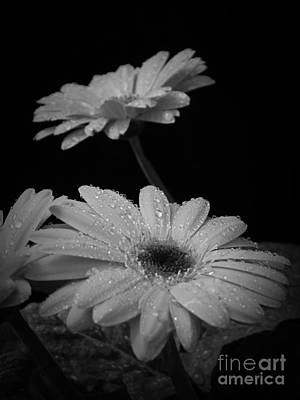 Photograph - Renewal Bw by Chalet Roome-Rigdon