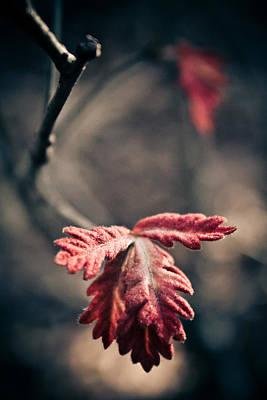 Renewing Photograph - Renewing The Spirit by Jessica Brawley