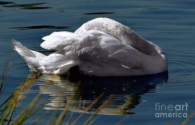 Digital Art - Reposing Swan by Dale   Ford