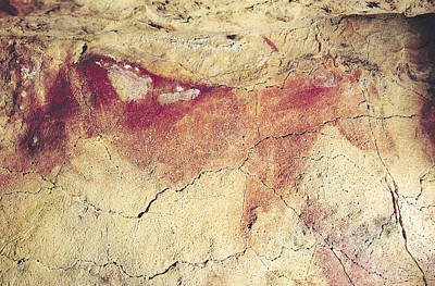 Mural Photograph - Representation Of An Animal, C.15000 Bc Cave Painting by Prehistoric