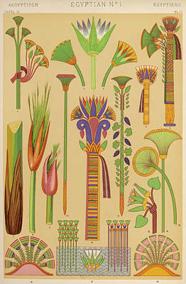 Papyrus Drawing - Representations Of Plants Of by Mary Evans Picture Library