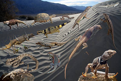 Collared Lizard Photograph - Reptile Collage by David Salter
