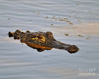 Reptile Reflection Art Print by Al Powell Photography USA