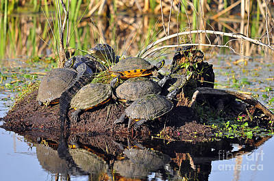 Reptile Refuge Art Print by Al Powell Photography USA