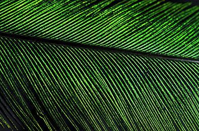 Quetzal Photograph - Resplendent Quetzal Feather Detail by Andres Morya Hinojosa