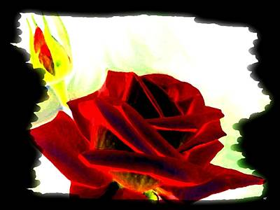 Digital Art - Resplendent Red Rose by Will Borden