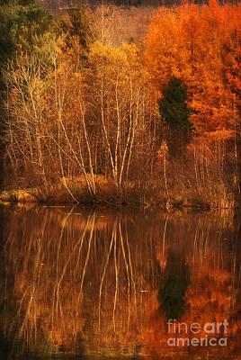 Photograph - Restes D'automne by Aimelle