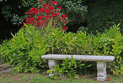 Photograph - Restful Park Bench by John Orsbun