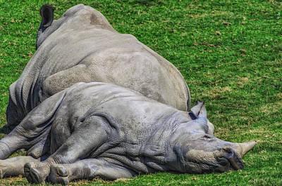 Rhinoceros Photograph - Restful Rhinoceros by Camille Lopez