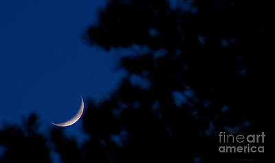 Moon Craters Photograph - Resting At Dusk by Lisa Holmgreen