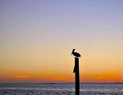 Photograph - Pelican Fishing At Sunset II by Kristina Deane