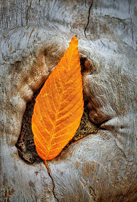 Photograph - Resting Autumn Leaf by Gary Slawsky