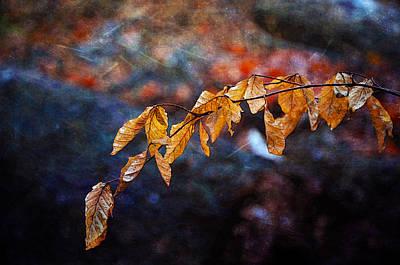 Photograph - Resting Branch by Randi Grace Nilsberg
