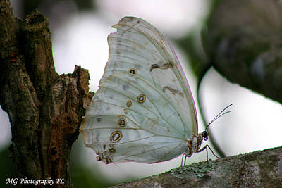 Resting Butterfly Art Print by Marty Gayler