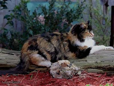 Photograph - Resting Calico Cat by Lesa Fine