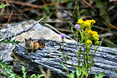 Resting Chipmunk  Art Print by Rebecca Adams